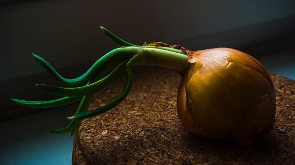 sipuli
